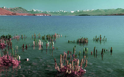 American West - Spring. Lake Tekapo, in Lupin Island, New Zealand - Surreal Art by Ahmet Asar by Celestial Images