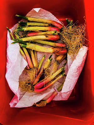Thomas Kinkade - Spring onions by Jeremy Holton