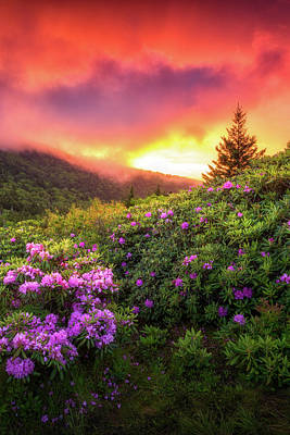 Open Impressionism California Desert Royalty Free Images - Spring Rhododendron Flowers Sunset Landscape Blue Ridge Mountains Tennessee Appalachian Trail Royalty-Free Image by Dave Allen