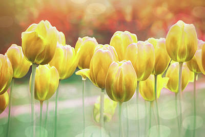 Little Mosters - Spring Tulips Glorious Yellow  by Carol Japp