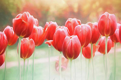 Little Mosters - Spring Tulips in Vibrant Red  by Carol Japp