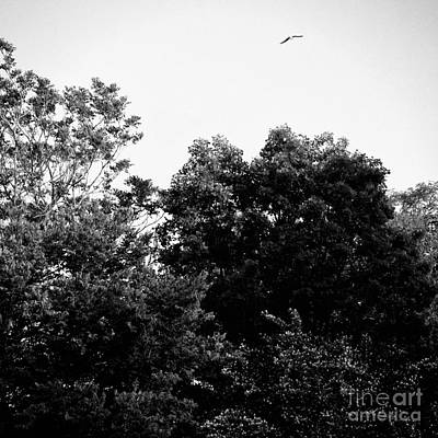 Frank J Casella Royalty-Free and Rights-Managed Images - Square - Free Bird Golden Hour Sunset - Black and White by Frank J Casella