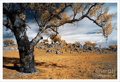 Photograph - Stark colour by Russell Brown