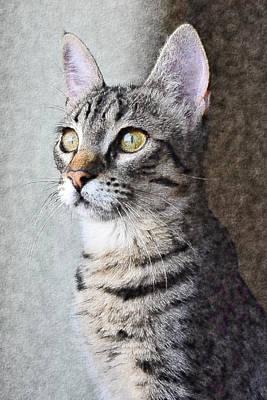 Photograph - Stately Cat by Mediamerge - Dan Roitner