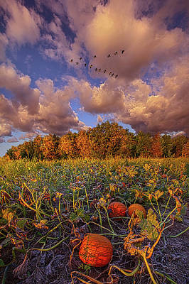 Animal Portraits - Stay For Just A While by Phil Koch
