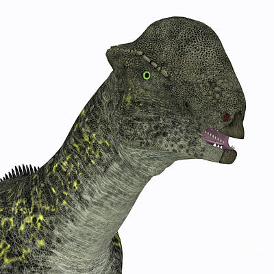 Achieving - Stegoceras Dinosaur Head by Corey Ford