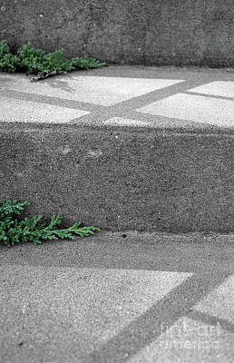 Photograph - Steps by Nicki Hoffman