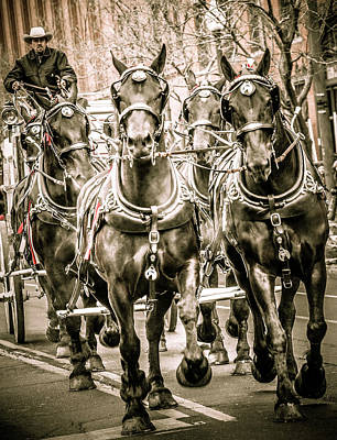 Animals Photos - Stock Show Parade Horses by Marilyn Hunt