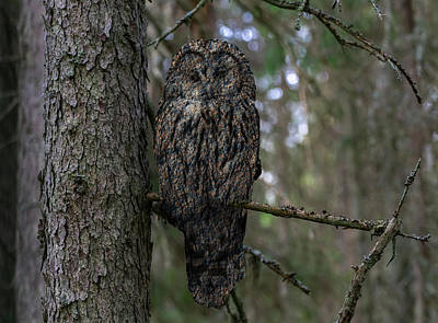 Animals Royalty-Free and Rights-Managed Images - Stone Owl by Pelo Blanco Photo