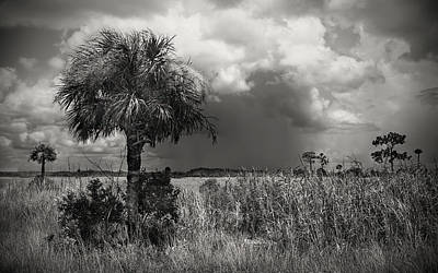Pineapple - Storm over Big Cypress - 1 by Rudy Umans
