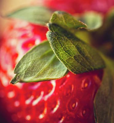 Animal Surreal - Strawberry Leaf by Sue Conwell