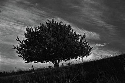 Photograph - Strong tree, uphill by Somerled Karlsson