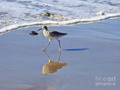 Photograph - Strutting My Stuff by Julieanne Case