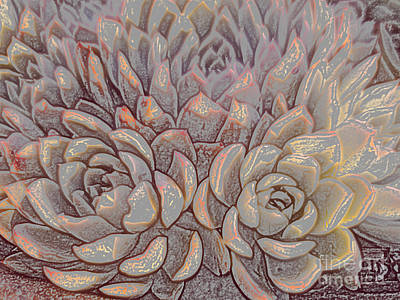 Photograph - Succulents 1 by Tracey Lee Cassin