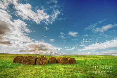 Photograph - Summer Bales by Ian McGregor