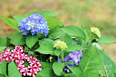 Amy Weiss - Summer Blooms by Diann Fisher