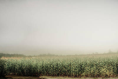 Aromatherapy Oils - Summer Dust Cornfield by Bob Orsillo