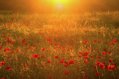 Angels And Cherubs - Summer Poppies by Fergal Gleeson