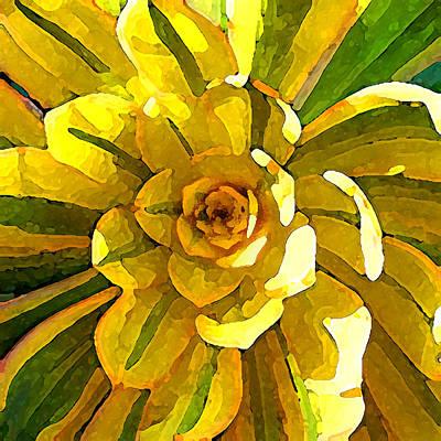 Painting - Sunburst Succulent Square by Amy Vangsgard