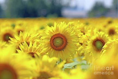 Studio Grafika Science - Sunflower  0099 by Jack Schultz