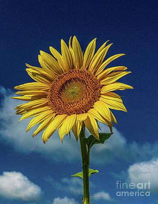 Studio Grafika Science - Sunflower 1 by Nick Zelinsky Jr