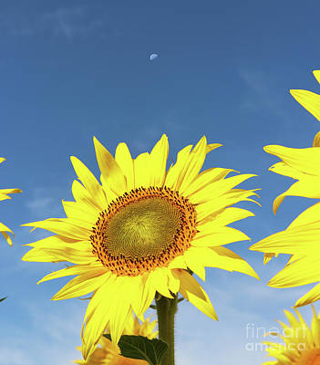 Space Photographs Of The Universe - Sunflower and Moon  0289 by Jack Schultz