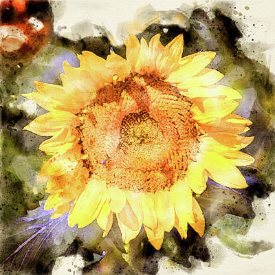 Photograph - Sunflower Digital Watercolor by Bud Simpson