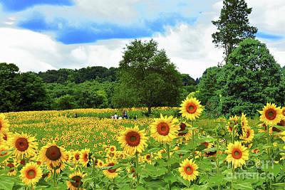 Vintage Signs - Sunflower Euphoria in NJ  by Regina Geoghan