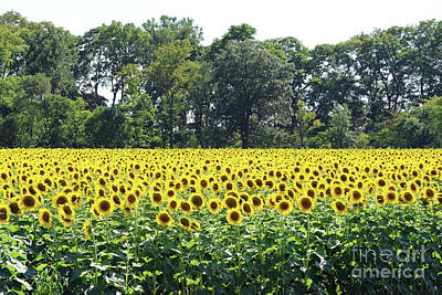 Space Photographs Of The Universe - Sunflower Field 0172 by Jack Schultz
