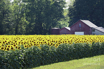 Space Photographs Of The Universe - Sunflower Field 0175 by Jack Schultz