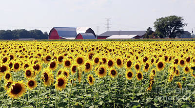 Space Photographs Of The Universe - Sunflower Field 0186 by Jack Schultz