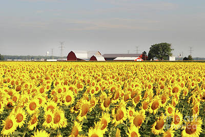 Space Photographs Of The Universe - Sunflower Field  0253 by Jack Schultz