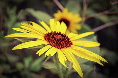 Unicorn Dust - Sunflower In July by Chad Vidas
