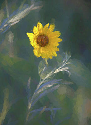 Royalty-Free and Rights-Managed Images - Sunflower in Morning Light by Darren White