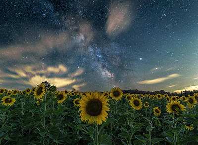 Photograph - Sunflower Milky Way by Willard Sharp