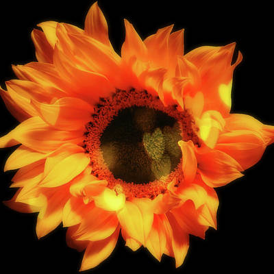 Pittsburgh According To Ron Magnes - Sunflower Passion by Johanna Hurmerinta