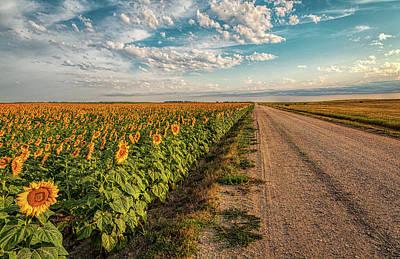 Photograph - Sunflower Road by Steve Sullivan