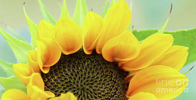 Door Locks And Handles Rights Managed Images - Sunflower Shapes 3892 Royalty-Free Image by Jack Schultz
