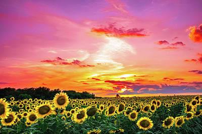 Photograph - Sunflower Sunset III by KC Hulsman