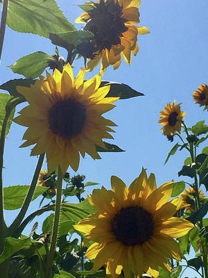 Photograph - Sunflowers by Annie Sliman