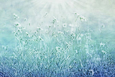 Surrealism Royalty-Free and Rights-Managed Images - Sunlight Glow Teal Blue Wildflowers by Jennie Marie Schell