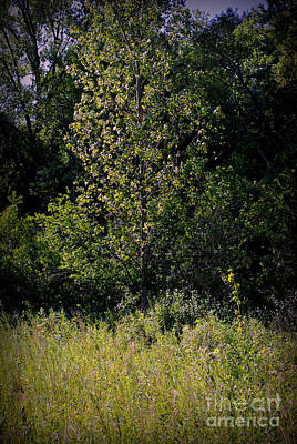 Frank J Casella Royalty-Free and Rights-Managed Images - Sunlit Tree in the Wetlands by Frank J Casella