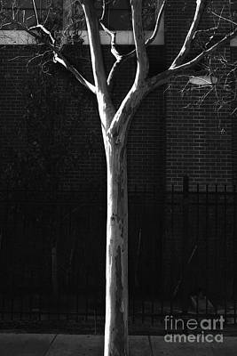 Pittsburgh According To Ron Magnes - Sunlit Tree by Steve Cukrov