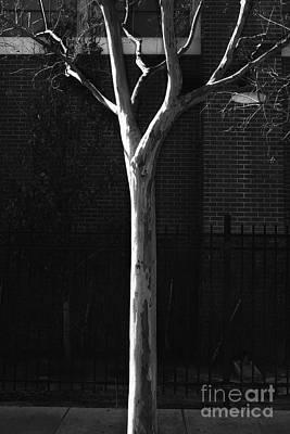 Mannequin Dresses - Sunlit Tree by Steve Cukrov