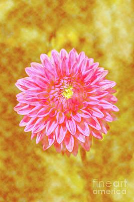 Digital Art - Sunny Dahlia by Tanya C Smith