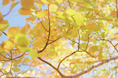 Photograph - Sunny Day Aspen I by Ana V Ramirez