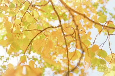 Photograph - Sunny Day Aspen II by Ana V Ramirez