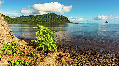 Science Collection - Sunny Morning Seascape from Kahaluu Kaneohe Hawaii by Phillip Espinasse