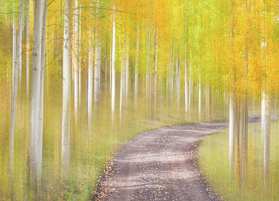 Royalty-Free and Rights-Managed Images - Sunny Stroll Through the Woods by Darren White