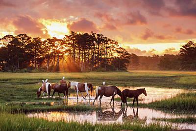 Photograph - Sunrise At Chincoteague by Shelley Paulson